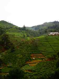 Nuwara Eliya to Kandy